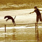 The Key To Dog Obedience Training