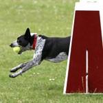 The Secrets of Amazing Dog Training