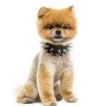 Are Dog-Training Collars cruel?