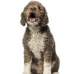 How can I control my dog's constant barking or high volume