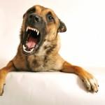 dominance based dog training