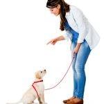Am I Hurting My Dog With My Dog Training