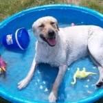 paddle pool